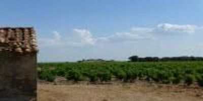 NASA Study Finds Climate Change Shifting Wine Grape Harvests in France and Switzerland