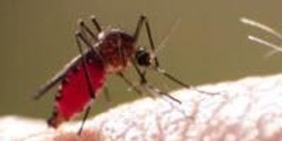 Zika, Mosquitoes, and How to Not Get Bitten
