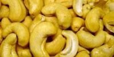 Purified Cashew Proteins Lend Insight into Allergic Reactions