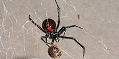 Spider Web Research Shows Promise for Noninvasive Genetic Sampling