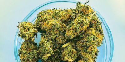 Cannabis Lab Design