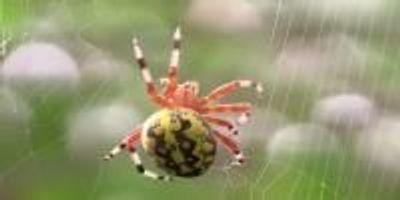 Spider Web Yields Clues to Stickier Glues