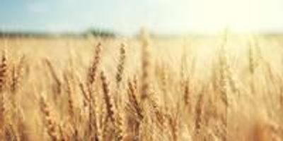 New DNA Sequencer Method Achieves Early-Stage and Broad-Range Detection of Wheat Diseases