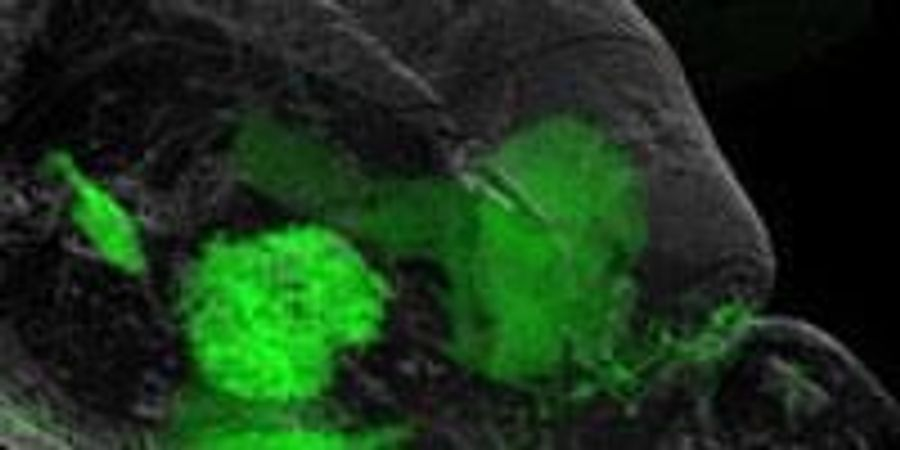 A New Target for Depression Treatment | Lab Manager