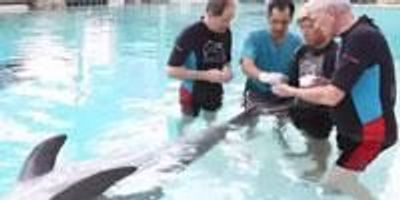 Johns Hopkins Researchers Partner with Resorts World Sentosa in Singapore to Probe Mercury Levels in Dolphins