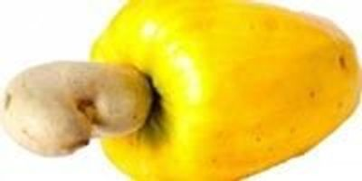 Green Chemists Find a Way to Turn Cashew Nut Shells into Sunscreen