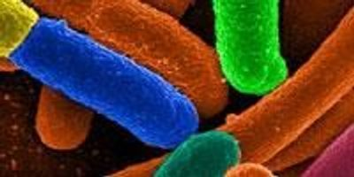 Bacteria 'Factories' Churn out Valuable Chemicals