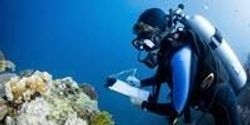 Largest-Ever Study of Coral Communities Unlocks Global Solution to Save Reefs