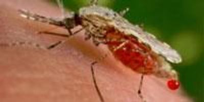 Innovative Method for Studying Malaria Parasites Receives 4-year NIH Grant
