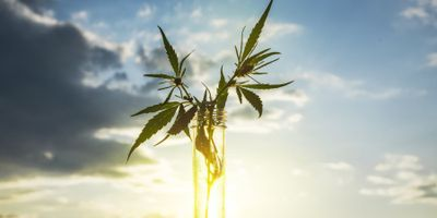 Cannabis Testing Resource Guide