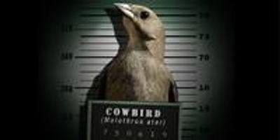 Fear of the Cuckoo Mafia