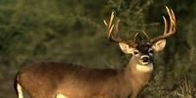 How the Science of Deer Hunting Can Help Patients with Diabetes