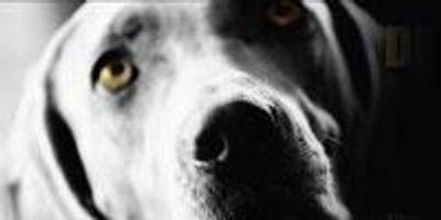 Huge Billboard Confronts Wayne State Over Dog Experiments