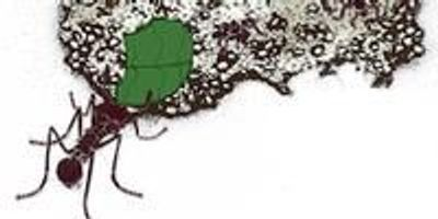 Researchers Unearth Bioenergy Potential in Leaf-Cutter Ant Communities