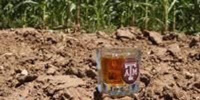 Corn Breeder Looking to Build a Better Bourbon