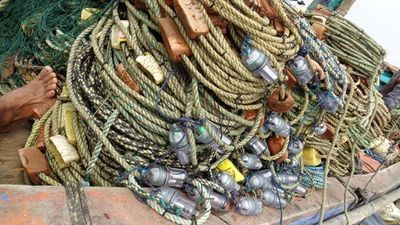 Lights on Fishing Nets Save Turtles and Dolphins