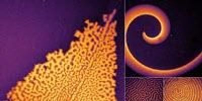 Scientists Dissect and Redesign Protein-Based Pattern Formation