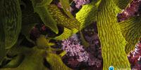 Coral Reefs Can't Return from Acid Trip