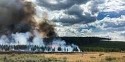 Resilience of Yellowstone's Forests Tested by Unprecedented Fire