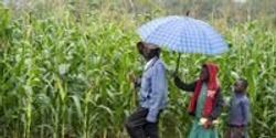No One-Size-Fits-All Solution for Sustainable Agriculture