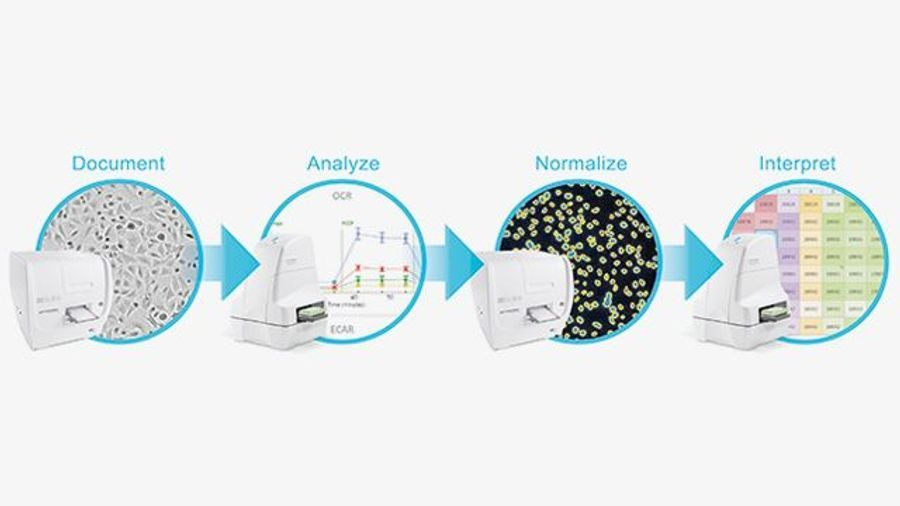 How Normalizing Biological Data Works