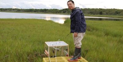 Wetlands Will Keep Up with Sea Level Rise to Offset Climate Change