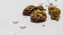 Focus on Opioids and Cannabis in Chronic Pain Media Coverage