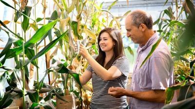 New Corn Performs Better in Cold