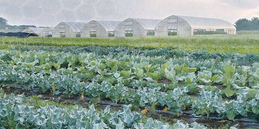 How Synthetic Biology Can Improve Agriculture
