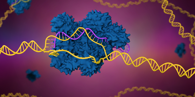 CRISPR-Edited Immune Cells Can Survive and Thrive after Infusion into Cancer Patients
