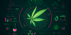 A Prescription for Cannabis