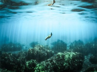 A Plan to Save Earth's Oceans