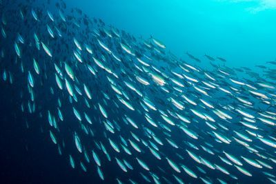 Fish School by Randomly Copying Each Other, Rather than Following the Group