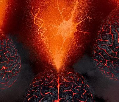 Scientists Create Tool to Detect Genes Associated with Psychiatric, Brain Diseases