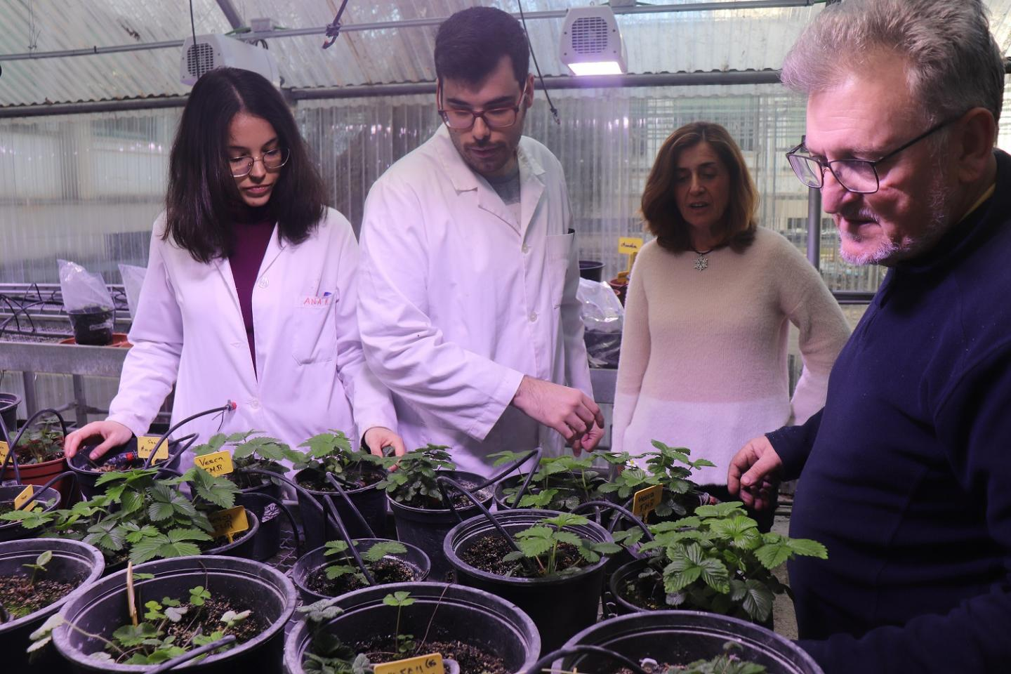 The Discovery of a New Gene That 'Supervises' Strawberry Ripening