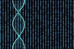 What Are the Differences Between DNA and RNA Probes?