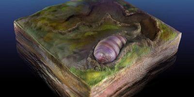 Ancestor of All Animals Identified in Australian Fossils