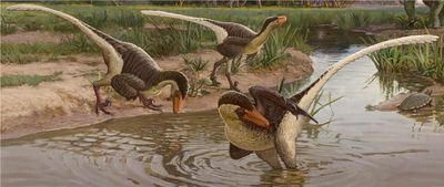 New Feathered Dinosaur Was One of the Last Surviving Raptors