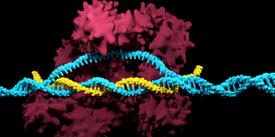 ERS Genomics and Axxam Announce CRISPR-Cas9 License Agreement to Enhance Discovery Services