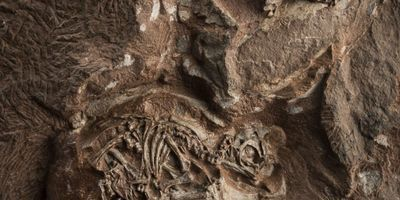 New Insights into Some of the World's Oldest Dinosaur Eggs