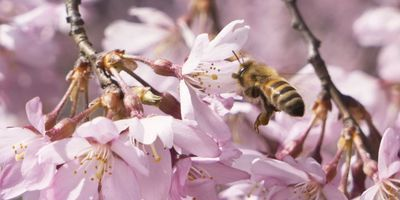 Researchers Make Wound Dressings out of Manuka Honey