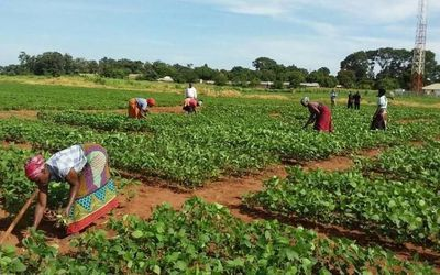 Soybean Innovation Lab Assists Crop Production in Africa