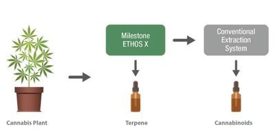Achieve the Highest Quality Terpenes with Microwave Extraction