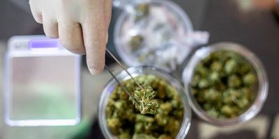 Could Cannabis Be an Effective Treatment for COVID-19?