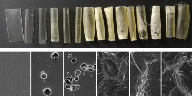 Heat-Friendly Microbes Provide Fast Way to Biodegrade Plastic