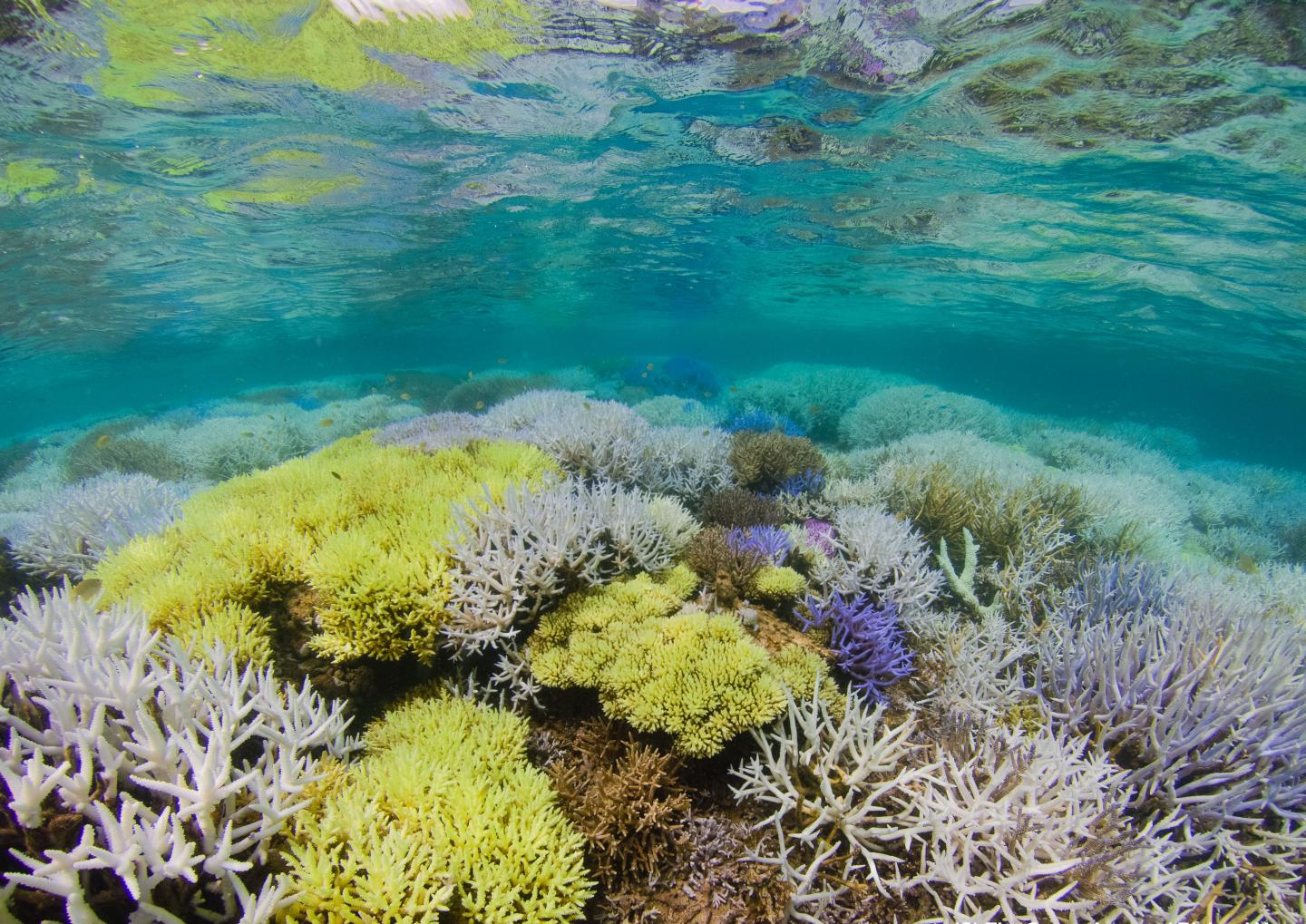 Alice May Porn Piçks mysterious glowing coral reefs are combating to get better