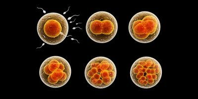 Cell Reproduction Dogma Challenged