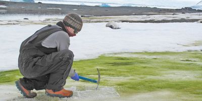 Scientists: Climate Change Will Turn Coastal Antarctica Green