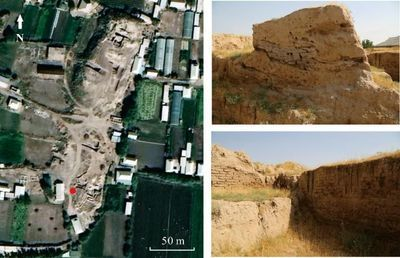 First Ancient Cultivated Rice Discovered in Central Asia