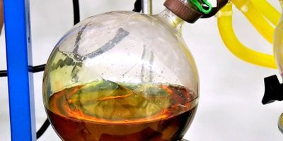 The Growing Market for Cannabis Extraction